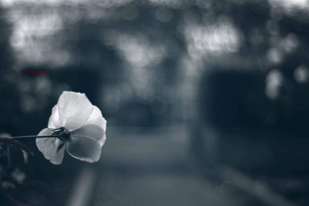 Photos: 青への憧憬......
