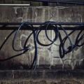 Photos: 蛇管.......