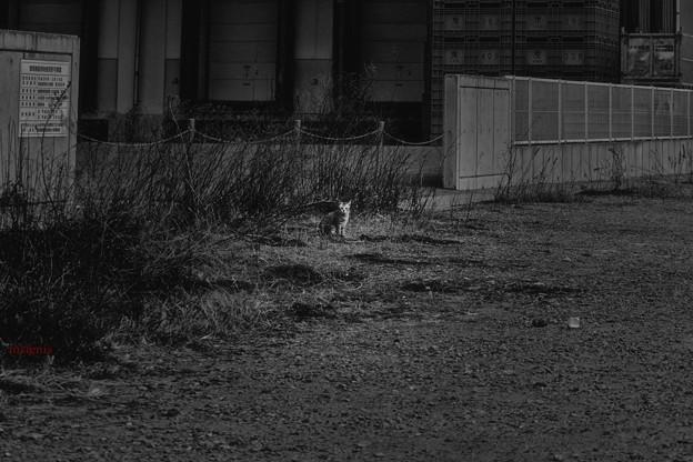 港猫.......