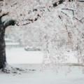 Photos: 花冷え.......