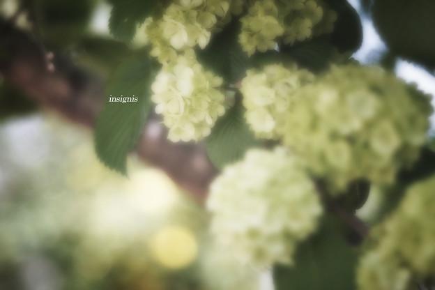 Photos: Spring green.......