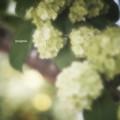 Spring green.......