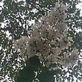 公園で見た白い花(2020.08.09)