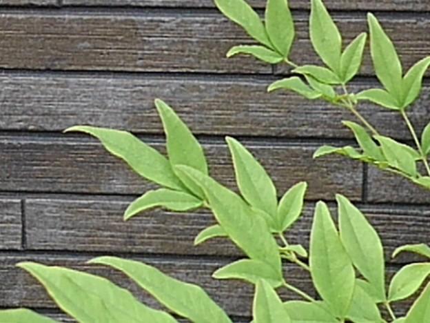 庭の葉と焦茶の壁