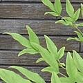 Photos: 庭の葉と焦茶の壁