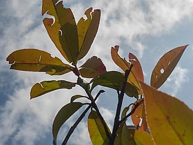 庭の葉と青空・赤色編
