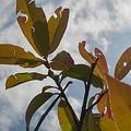 Photos: 庭の葉と青空・赤色編