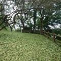 川崎城跡公園の丘の景色(8月1日)