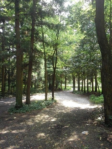 森の中(8月10日)