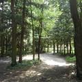 Photos: 森の中(8月10日)