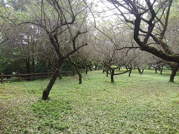 川崎城跡公園の丘の緑の地面