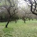 Photos: 川崎城跡公園の丘の緑の地面