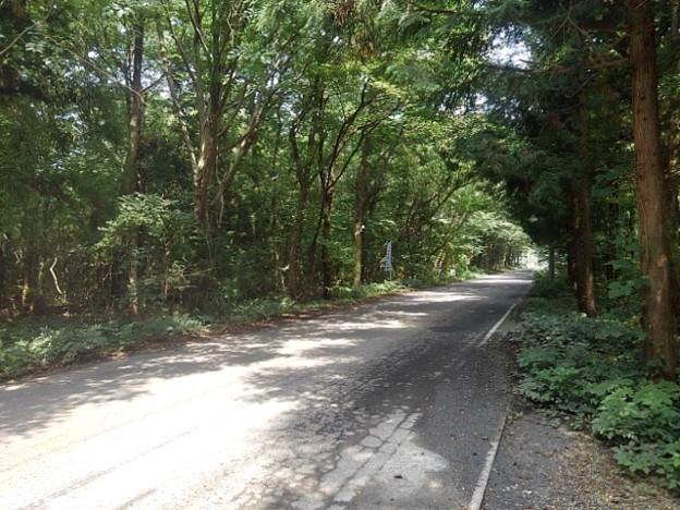 森の中の道路