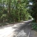 Photos: 森の中の道路