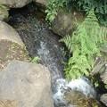 烏ヶ森公園の人工滝(8月10日)