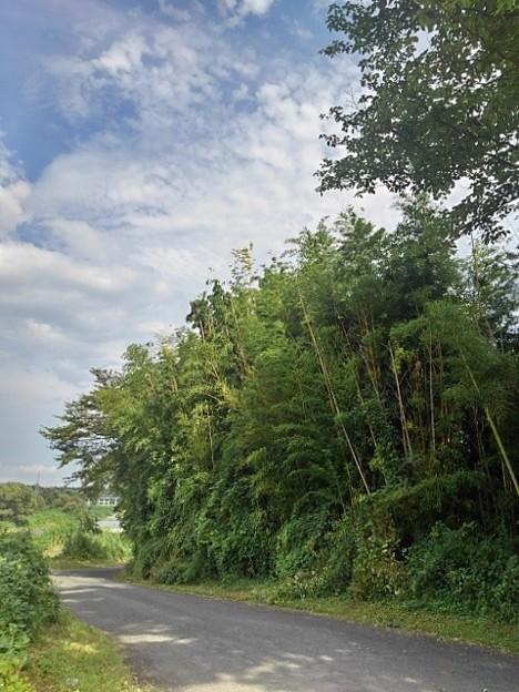 川の近くの道(8月12日)