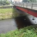 橋の近く(8月17日)