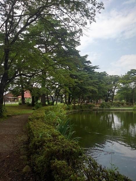烏ヶ森公園の池の道(8月10日)