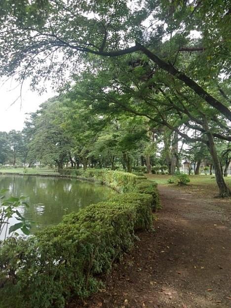 池の近くの緑のトンネル(8月10日)