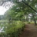 Photos: 池の近くの緑のトンネル(8月10日)