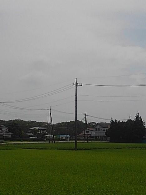 田園地帯(8月17日)