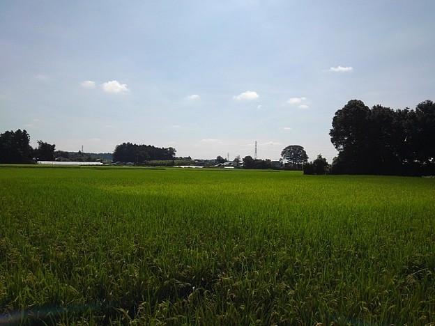 Photos: 青空ののどかな景色(8月19日)