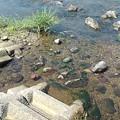 Photos: 綺麗な川(8月20日)