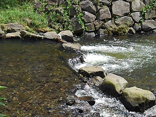 土手の石垣と綺麗な川(8月24日)
