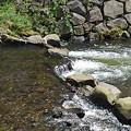Photos: 土手の石垣と綺麗な川(8月24日)
