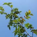 葉と空(8月21日)