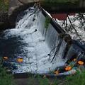 Photos: 川の堰(8月27日)