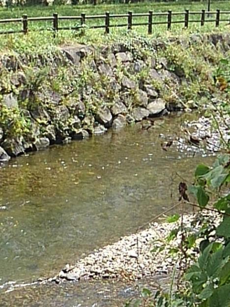 土手の石垣もある水辺の景色(8月24日)