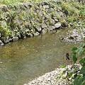 Photos: 土手の石垣もある水辺の景色(8月24日)