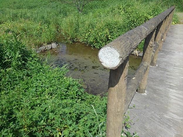 郊外の小川の景色(8月29日)