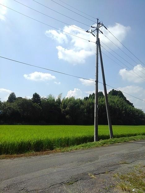 郊外の道の景色(8月29日)