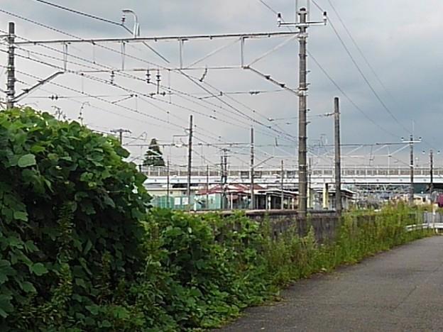 線路沿いの道からの眺め(8月30日)