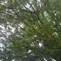 小さな公園の緑(8月30日)