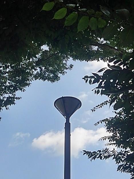 小さな公園の街灯と緑(8月30日)