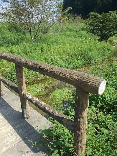小川のどかな景色(8月29日)