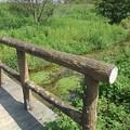 Photos: 小川のどかな景色(8月29日)
