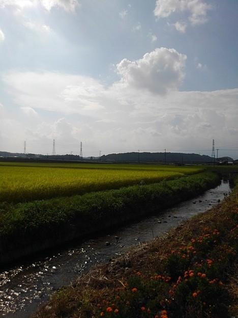 用水路もある景色(8月29日)