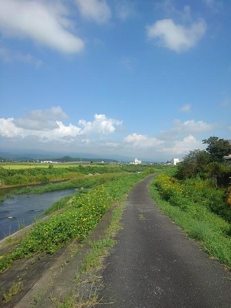 土手の道(9月4日)
