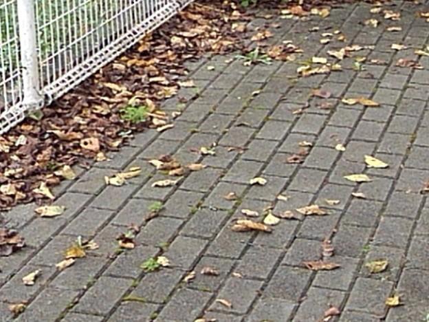 公園の石畳の道(9月13日)