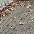Photos: 公園の石畳の道(9月13日)