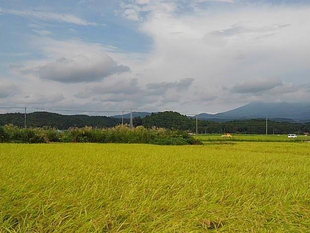 田園地帯(9月16日)