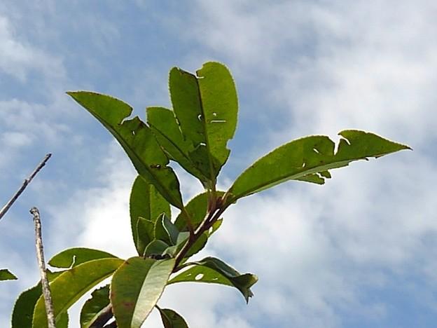 観葉植物(9月9日)