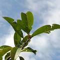 Photos: 観葉植物(9月9日)