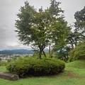モミジの木(9月1日)