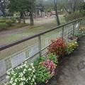 烏ヶ森公園の休憩所のベゴニアメインのプランター群