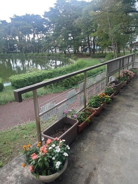 烏ヶ森公園の休憩所の鉢植え達